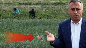 İşte İstanbula ıspanak gönderen o tarlalar Şüpheli ot bulundu...