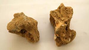 Ispartada bulundu 7-8 milyon yıl öncesine ait...