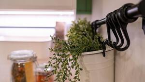 Dikkat Mutfağınıza yapraklı bitkiler koyarsanız...