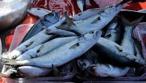 Lüfer Marmarada balıkçının yüzünü güldürmeye başladı