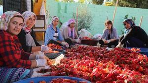 Tarım işçisi kadınlar kooperatif kurdu, kendi ürünlerini satıyorlar
