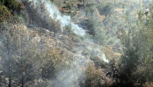 Seydikemerde orman yangını