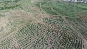 AOÇ arazisinde çiftçiler için tohum üretilecek
