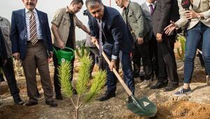 ValiYerlikaya: Bu yıl sonu 1.5 milyon fidan toprak ile buluşacak
