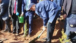 Çankırıda 205 bin fidan toprakla buluşturuldu