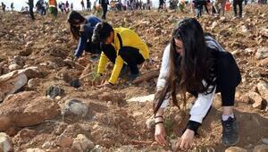 KOSKİ'den Geleceğe Nefes projesi için 42 bin fidan
