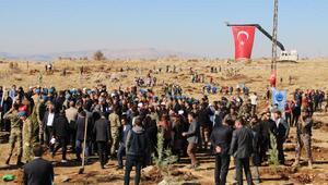 Şırnakta, Bakan Soylunun katılımıyla 52 bin fidan toprakla buluşturuldu