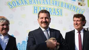 Balıkesirde 3 yılda 4 bin 725 sokak hayvanı sahiplendirildi