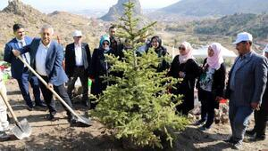 Afyonkarahisar Belediyesi 11 bin fidan dikti