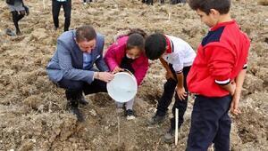 Bandırma'da 5 bin fidan toprakla buluştu