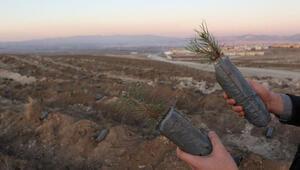 Türkiye ağaç dikmede Guinness rekorunu kırdı