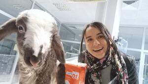 Kuzuyu sevgi kurtardı