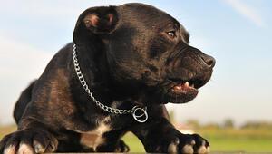 Köpeğini ırkçı saldırıda silah olarak kullandı
