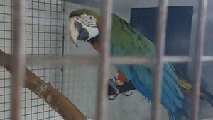 Papağan satmaya çalışırken yakalandılar