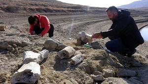 Balık tutmaya gelen kişi ihbar etti Kayseride 7,5 milyon yıllık yeni fosil bulundu