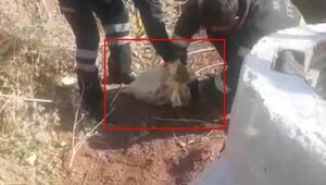 İsyan ettiren olay Yavru köpekler böyle kurtarıldı