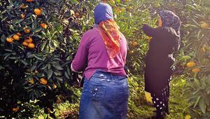 Lösemili çocuklara mandalina topladılar