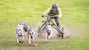 Bir garip yarışma: Dünya Köpek Kızağı Şampiyonası