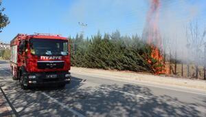 Kaynak makinesinden sıçrayan kıvılcım, ağaçları yaktı