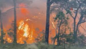 Avustralya'da orman yangınları güneye doğru ilerliyor