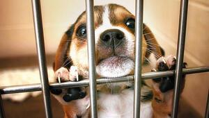 10 ayda 3 mİlyon TL ceza kesildi: 15 yılda barınaktan 368.803 hayvan kurtuldu