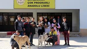25 köpeğiyle öğrencilere hayvan sevgisini öğretiyor