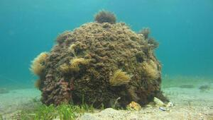 1inci Dünya Savaşından kalma su altındaki mühimmat imha edildi