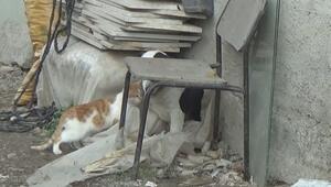 Köpek kediyi emzirip, annelik yapıyor