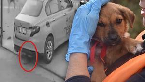 Taksi adı verilen köpekten iyi haber
