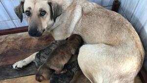 Anne ve yavruları güvenli ellerde