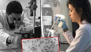Tekirdağ'daki ölümün ardından uyarı geldi 5 bin sivrisinek incelendi...