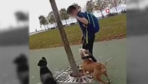 Magandanın, kediyi köpeklere parçalattığı anlar kamerada