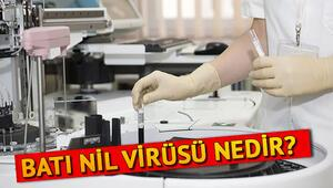 Batı Nil Virüsü nedir nasıl bulaşır İşte Batı Nil Virüsü belirtileri