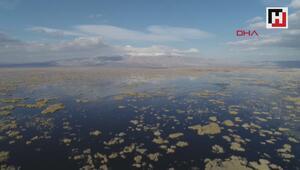 Eber Gölünde su, günden güne azalıyor