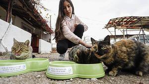 Sokak kedileri için ombudsmandan yardım istedi