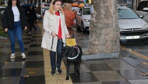 Ankara'da bir rehber köpek var