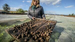 Tunuslu kadın girişimci salyangoz yetiştiriciliği yapıyor