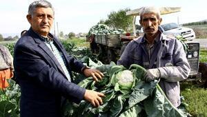 Kışlık sebze yetiştiricileri karlı kış günlerini bekliyor