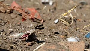 Plastik kirliliği yarım milyon keşiş yengecini öldürdü