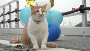 Maskot kedi için doğum günü partisi düzenlendi