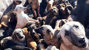 Kamyonla Mersin'e getirilen köpekler, Alanyaya geri gönderildi