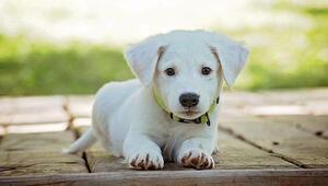 Rüyada köpek görmek ne anlama gelir Rüyada köpek ısırması ve köpeğin ısırdığını görmenin anlamı
