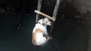 Fethiyede su kuyusuna düşen köpeği itfaiye kurtardı