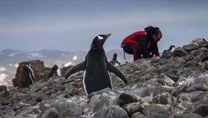 Antarktika seferleri meyvelerini vermeye başladı