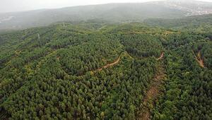 Ormanların kalitesini artırmak için özel bahçelerde fidan tohumları üretimi