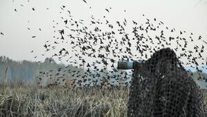 Muş Ovasının kuşları Halil İbrahim öğretmenin objektifinden yansıyor