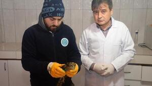 Bilecik'te tedavi edilen atmaca doğaya salındı