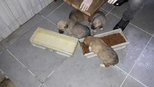 Yavru köpekler koruma altında