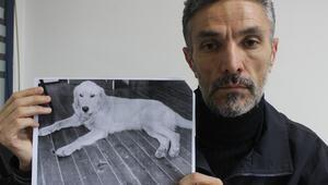 Akıllara durgunluk veren olay Bursa'da çalınan köpeğini Amerikada buldu