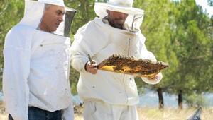 Yenişehirli arı yetiştiricisinin yüzü gülüyor